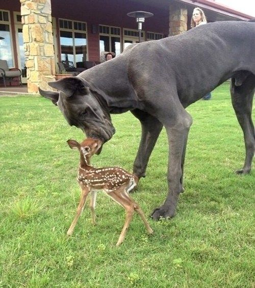 Little fawn and big pup