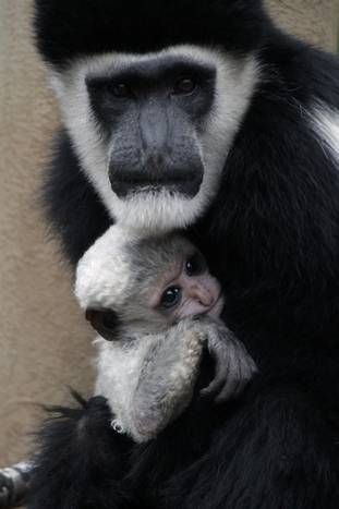 For Mothers Day, see mom and baby animals at the Dallas Zoo