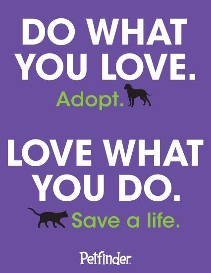 Truer words... #adopt