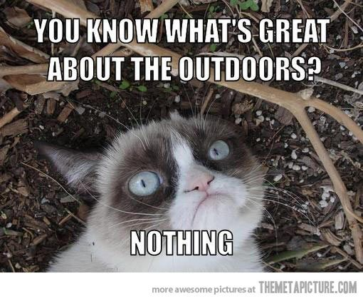 Grumpy Cat on the outdoors…