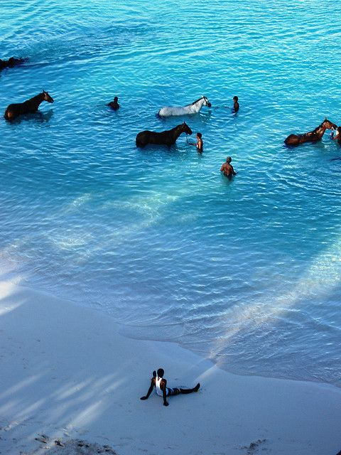 Barbados - Every morning, horses are brought by their handlers from the nearby racetrack to the sea at Carlisle Bay to be washed. Some of the them are given a swim as well.