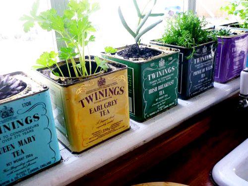 Herb garden in tea tins.