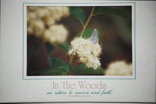 In The Woods  636 by AllToolsPrayerful on Etsy, $2.00