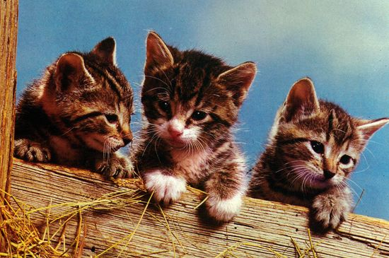 vintage post card with cute cats