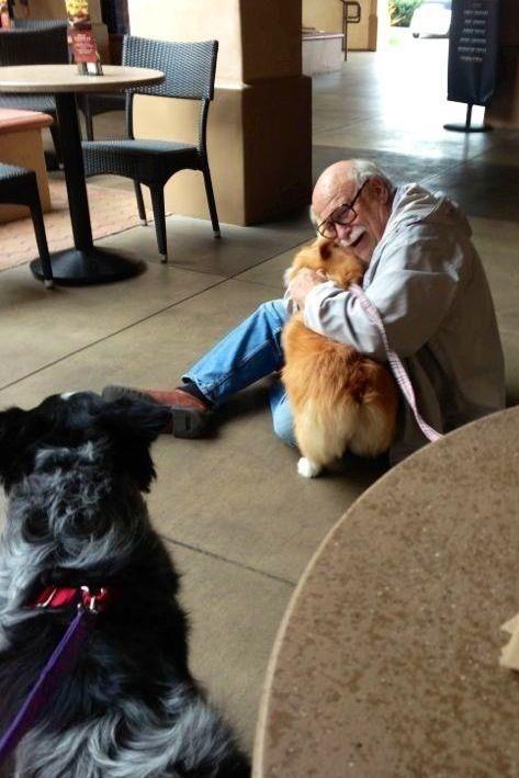 A corgi bringing joy to an elderly man she just met.