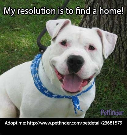 If you've resolved to help save pets, repinning Titian is an easy way to fulfill that!  Twitter people please tweet to help  out the more people that will do that the better chance for them to get adopted