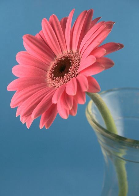 Flower Arranging for Beginners, via Flickr.