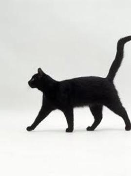 #cat  missu,.  #bennybunny  XDD  ,.#spilledthecologneOnItsEyes  omo ./XDD