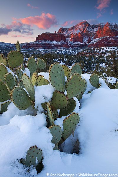 Natures Garden. Winter sunset on Red Rock Country from Schnebly Hill, Sedona, Arizona