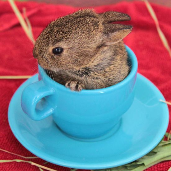 This little bunny is in a cup.