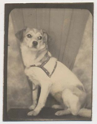 Tag The Wonder Dog Vtg 30's Cute Pet Photobooth Photo Backdrop