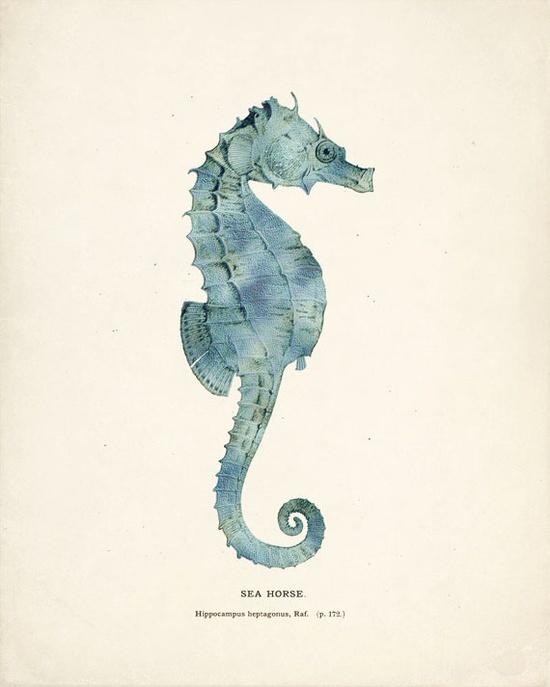 Antique Sea Horse Print in Sea Foam 8x10