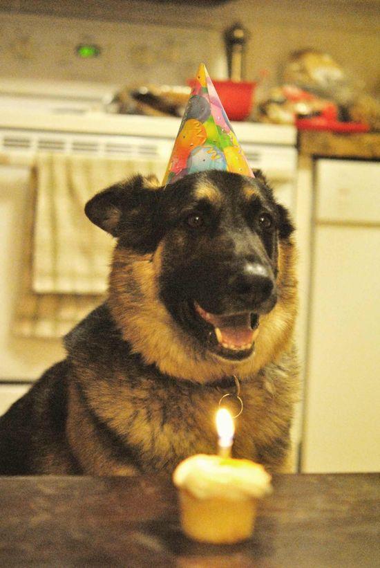Birthday dog.