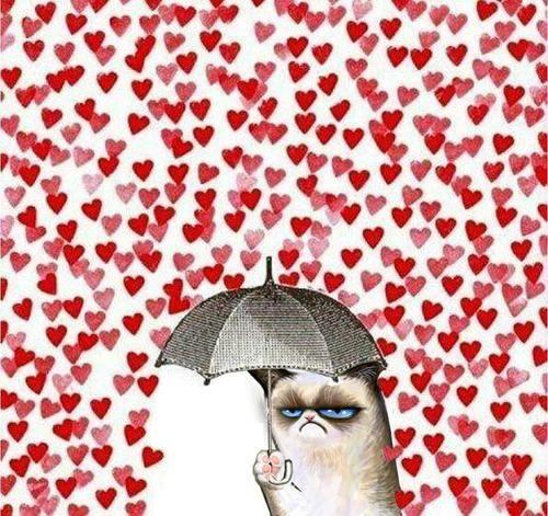 Grumpy cat...