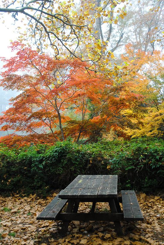 Autumn ~ nice spot for picnic