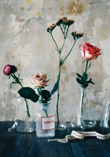 Single stems of flowers arranged in various glass vessels.  lovely styling by Glen Proebstel