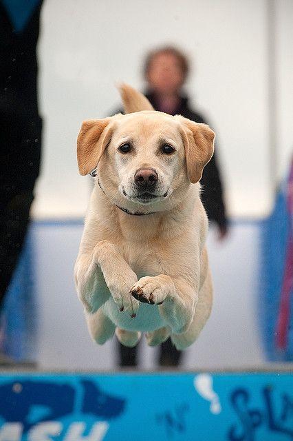 Performance dog