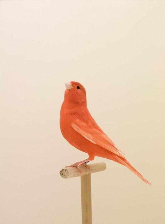 Luke Stephenson: The Incomplete Dictionary of Show Birds