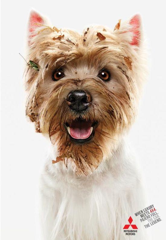 Mitsubishi Pajero Full: Dogs.