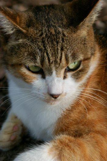 Beautiful cat. #Cute #Cats