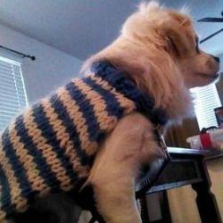 Handmade Gift Ideas: Dog Sweater