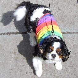 Pet-Friendly Travel Tips - Gay Agenda