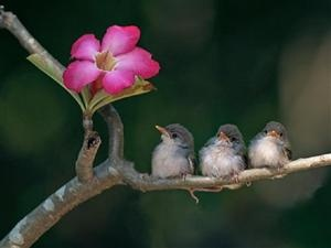 Three birds with flower.