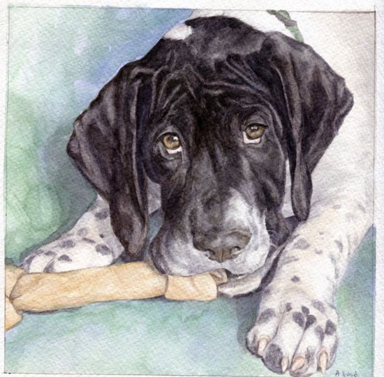 Custom watercolor portraits of pets or people from photos........