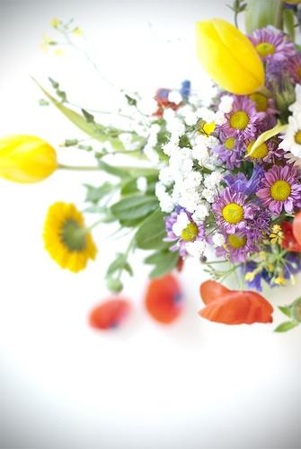 fiori di campo {my pics}