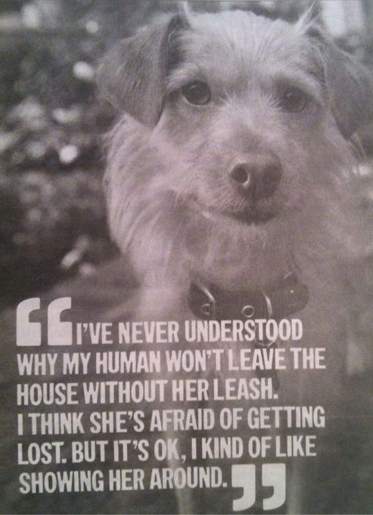 A dogs perspective.