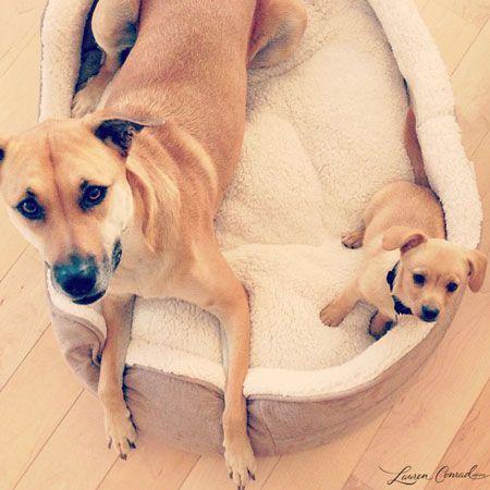 little dog... big dog!! awwwww
