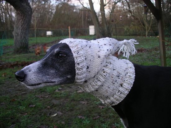 Greyhound Pixie Hat     I'll take 2.  All proceeds donated to a greyhound rescue in Spain.