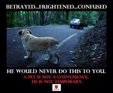 Don't abandon your dogs..