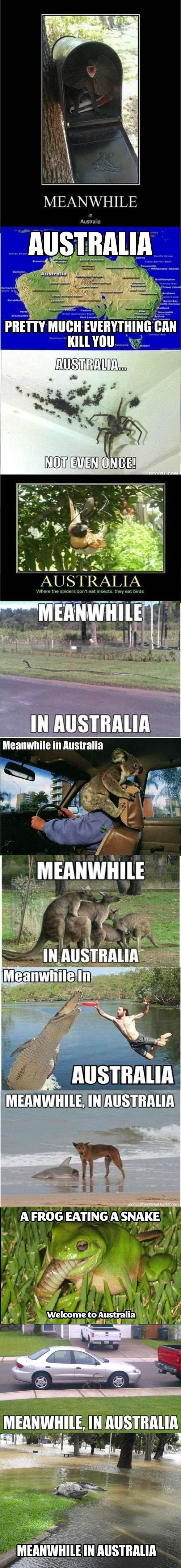 Meanwhile in Australia D:  Always thought I wanted to visit but am having second thoughts!