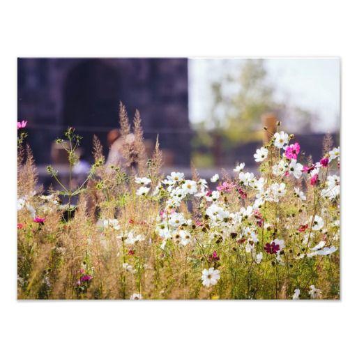 Wild Flowers Field, Meadow Photograph
