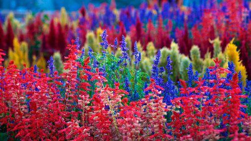 Colorful Garden colorful garden color gardening garden decor gardening images garden photos garden ideas garden art