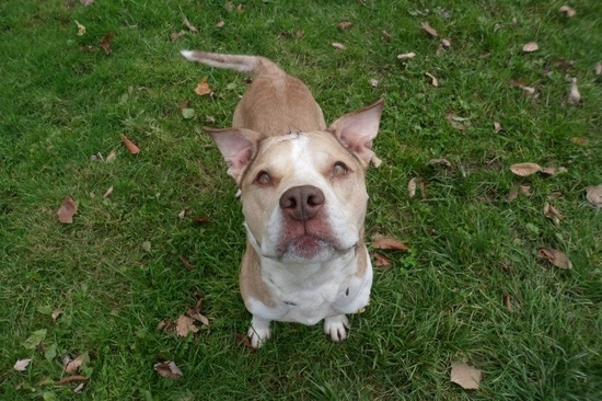 Available for Adoption in Skowhegan Maine! Share the pin and find Max a good home!