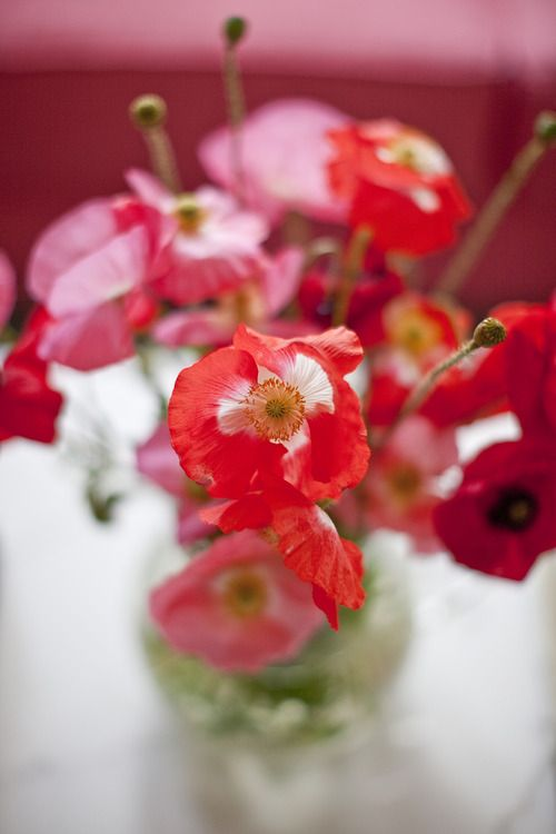 red poppies #FlowerShop
