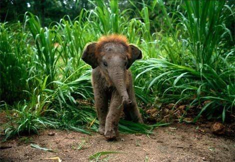 Baby Animals... Baby Animals...