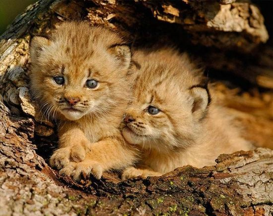 Incredibly Cute Baby Animal Photography from Around the #Baby Animals #cute baby Animals