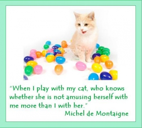 quotes about cats 1  best quotes about cats when i play with my cat