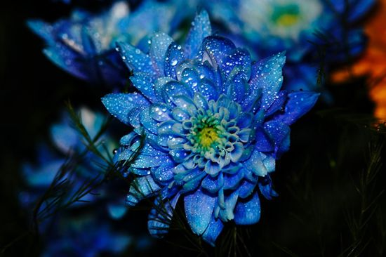Unique & Beautiful Flower Photography