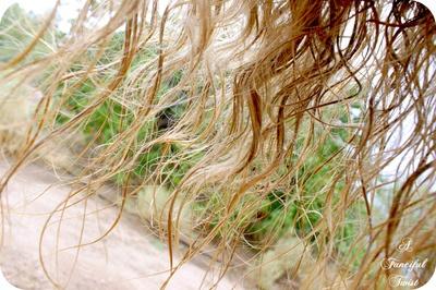 long hair shot