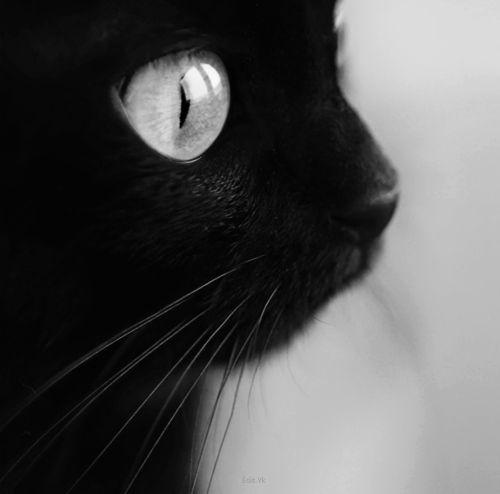 black cat on weheartit.com