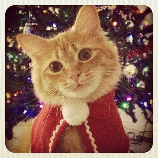 Cute pets in holiday garb