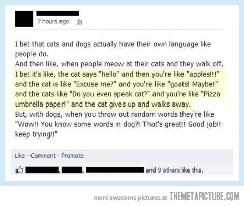 Do you speak cat?