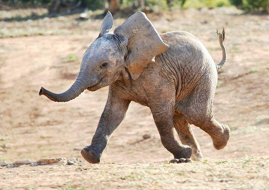 Lovely Baby elephant