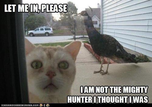 Haha, I love cats.