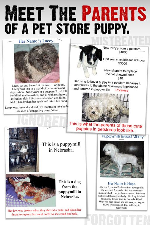 Don't buy your pets from a pet store