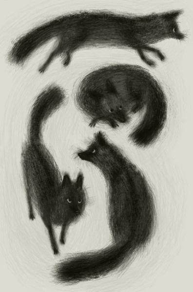 fox, fox, fox, and fox